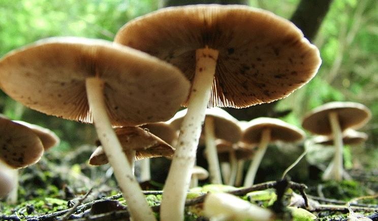 Funghi: come riconoscerli per evitare brutte sorprese