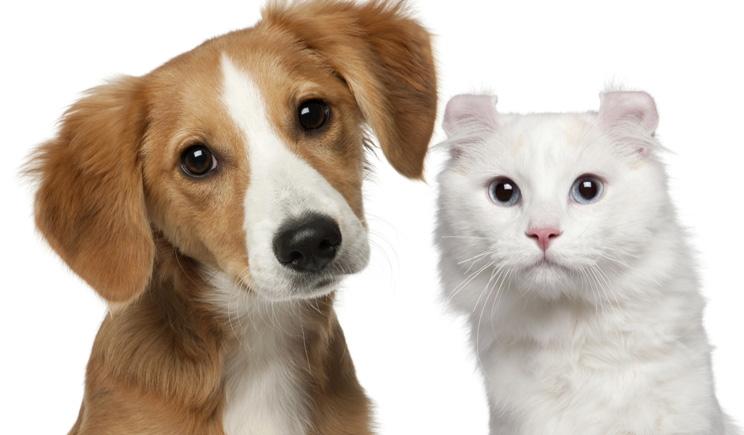 Nasce il primo cimitero per animali domestici