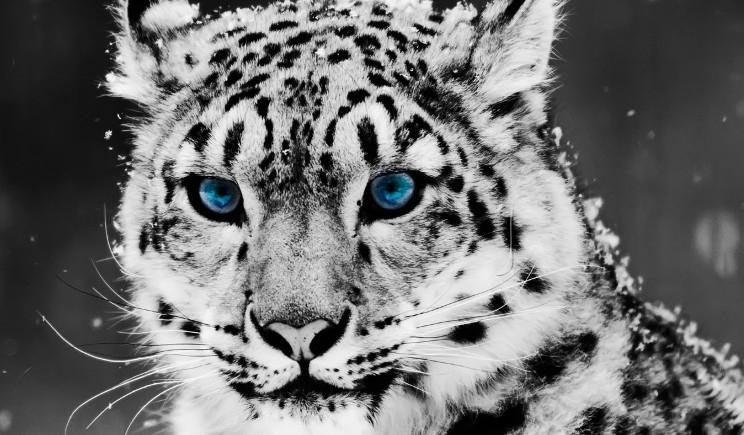WWF, calendario 2016 dedicato agli animali in via d'estinzione