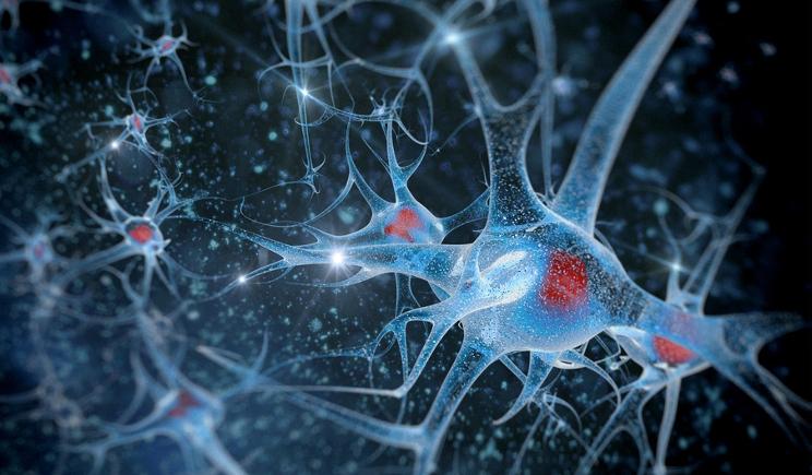 Sla, scoperto l'elemento che avvelena i neuroni