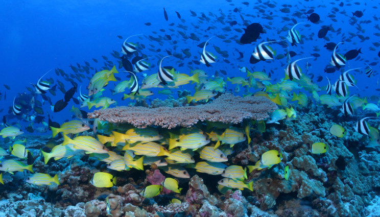 Alle Hawaii la riserva marina più estesa del mondo