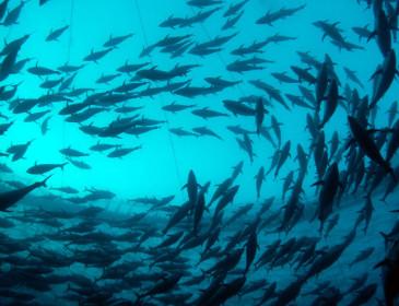 Grandi animali marini verso l'estinzione di massa?
