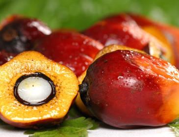 Dalla Ferrero via libera all'olio di palma sostenibile