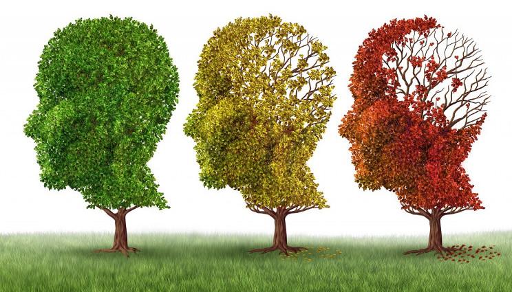 Alzheimer: scoperta la proteina che evita i danni alla memoria