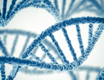 Sclerosi multipla, un gene aumenta il rischio