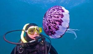 medusa puntura
