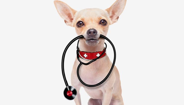 Cardiopatie Congenite nei cani: c'è da preoccuparsi?