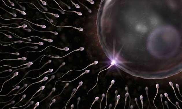 Spermatozoi e ovuli, fotografato il loro pirotecnico incontro
