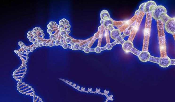 Dna, decifrata la mappa che regola l'attività dei geni