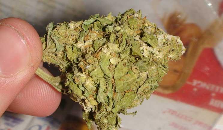 """Fumare abitualmente """"super-cannabis"""" può indurre schizofrenia"""