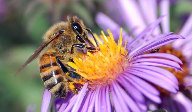 Biodiversità: a rischio il 20% delle specie animali italiane