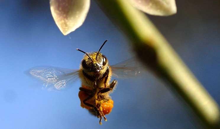 Storia di una discarica trasformata in Oasi della Biodiversità