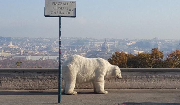Greenpeace: un orso polare a spasso per Roma