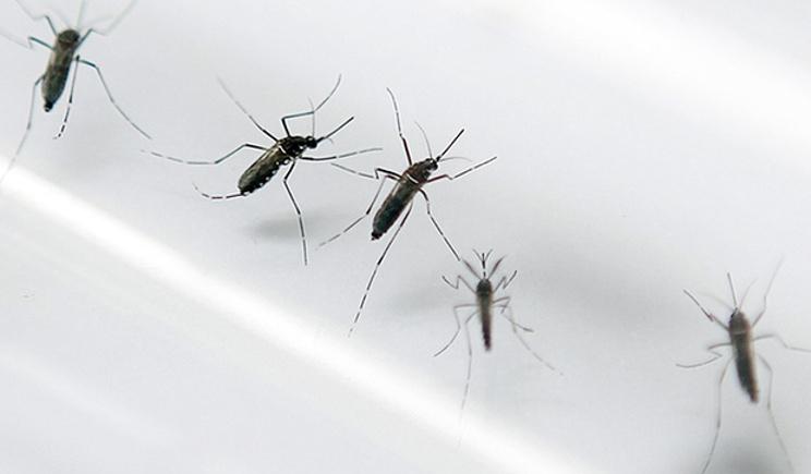 Virus Zika, accertato il primo caso di trasmissione per via sessuale