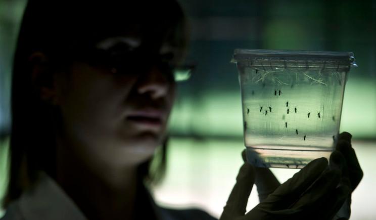Virus Zika, in Texas il primo caso di trasmissione per via sessuale