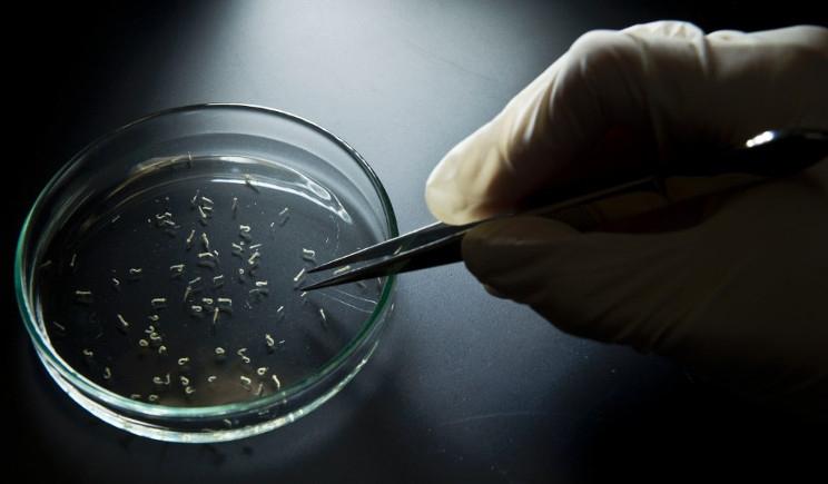 Virus Zika: possibile allarme in Italia da maggio?