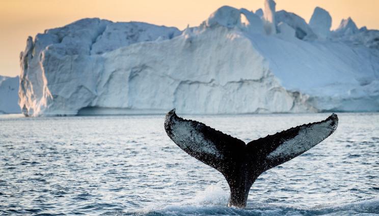 Groenlandia: scioglimento record dei ghiacci