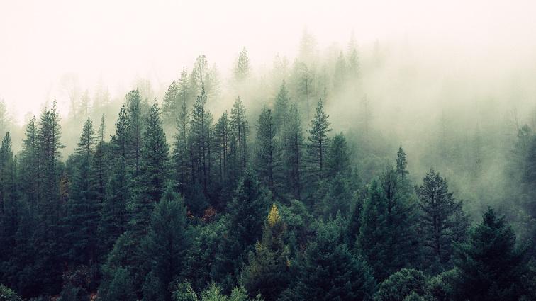 """La Terra è più verde """"per colpa"""" della Co2"""