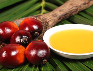 Dossier Efsa: l'olio di palma è cancerogeno?
