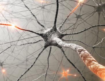 Erbe aromatiche contro la sclerosi multipla