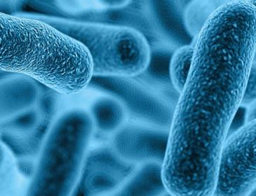 Lotta al cancro: ecco il batterio sintetico che attacca le cellule tumorali