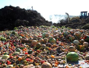 Lo spreco alimentare ci costa 13 miliardi ogni anno