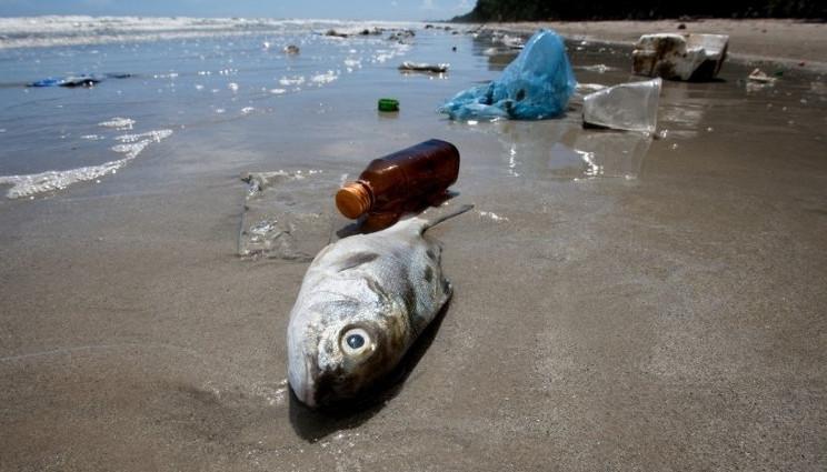 Greenpeace: la plastica in mare finisce sulle nostre tavole