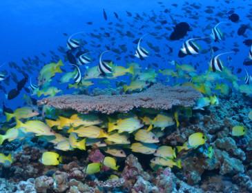 Alle Hawaii Obama dà vita alla riserva marina più estesa del mondo
