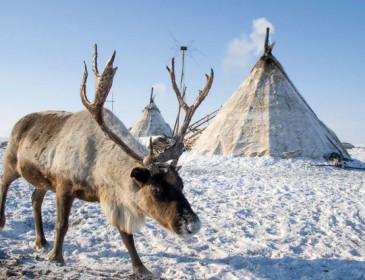 """Siberia, epidemia di antrace a causa di un batterio """"risvegliato"""""""