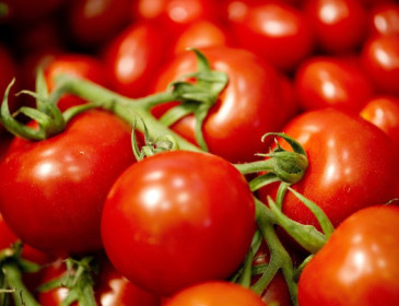 Pomodoro, la ricerca restituisce il sapore perduto