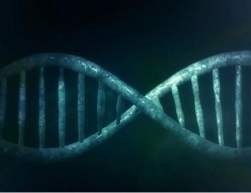 Scoperte le molecole alla base dell'invecchiamento