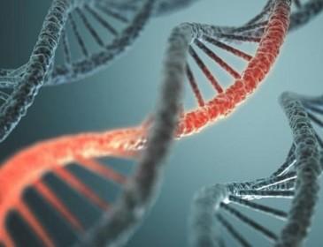 Tumori, mutazioni casuali del Dna tra le cause principali