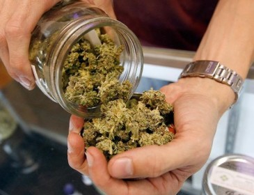Boom di ordini per la Marijuana legale