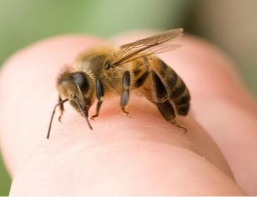Agricoltore morto per la puntura di un'ape